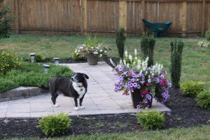 Dog outside in yard